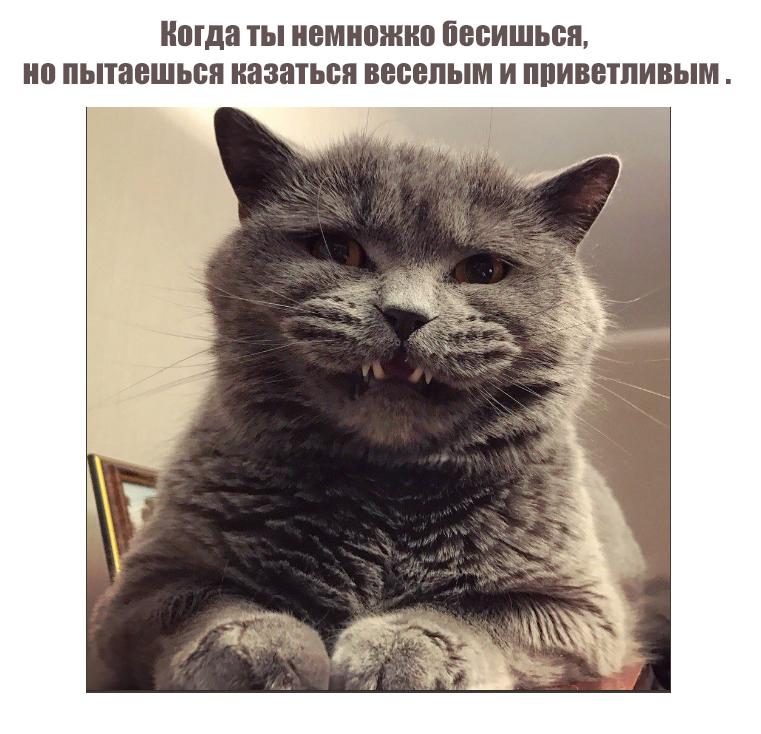 Смешные картинки-36 фото-