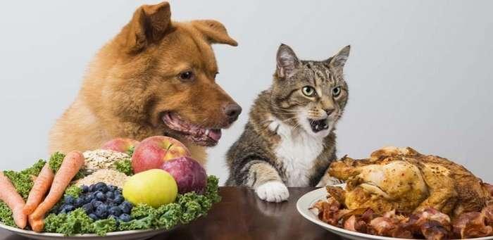 Ну дай вкусняшку, или как выпросить еду у хозяина!-29 фото-