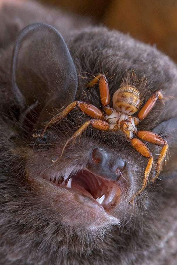 Природа - жуткая и пугающая: 25 шокирующих фото-25 фото + 1 гиф-