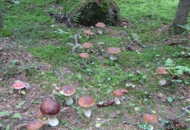 Как сеять грибы, чтобы они росли на вашей даче-9 фото-