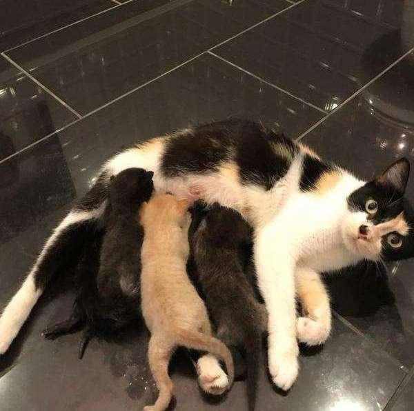 Трое котят жалобно звали маму. отважный парень приютил малышей и бросился на её поиски!-5 фото-