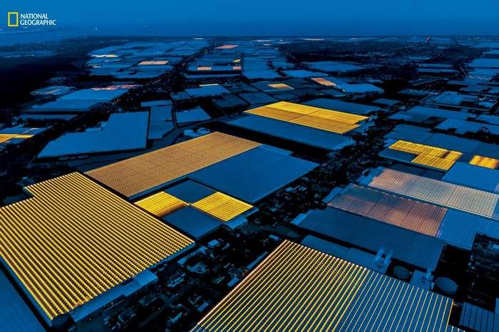 Нидерланды: высокотехнологичное будущее сельского хозяйства-4 фото-