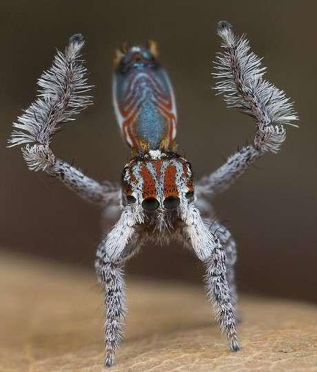 В Австралии обнаружен самый красивый в мире паук-11 фото-