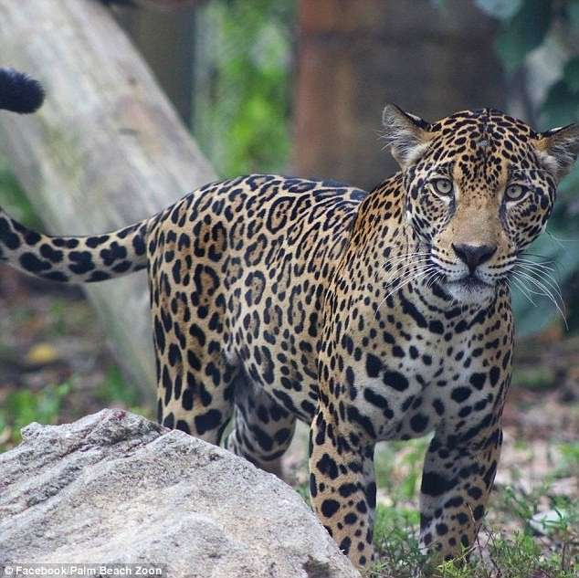 А как же животные? Зоопарки США готовятся к -Ирме--9 фото-