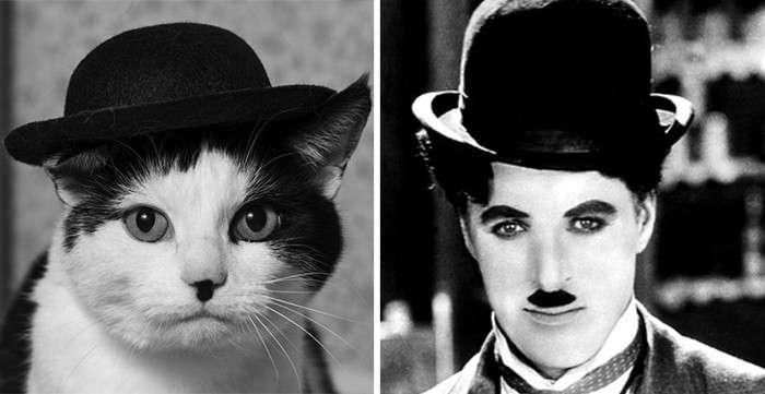 Животные - двойники знаменитостей-41 фото-