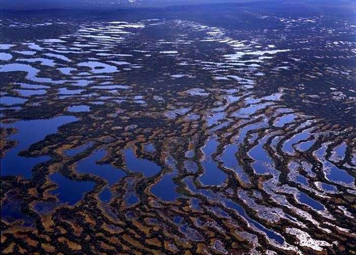 Большое Васюганское болото - природный феномен, не имеющий аналогов в мире!-17 фото + 1 видео-