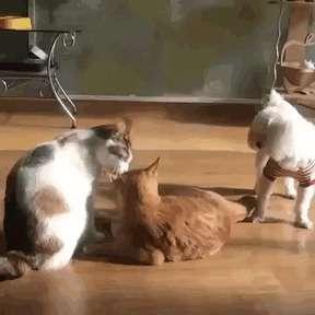 Когда между кошками и собаками что-то пошло не так-26 фото + 15 гиф-