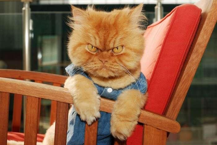Самые сердитые животные в мире… на которых невозможно смотреть без улыбки-34 фото-