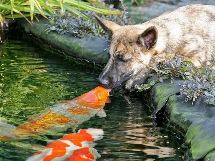 Необычные фото животных-20 фото-