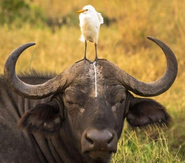 17фото, накоторых животные оказались настоящими засранцами