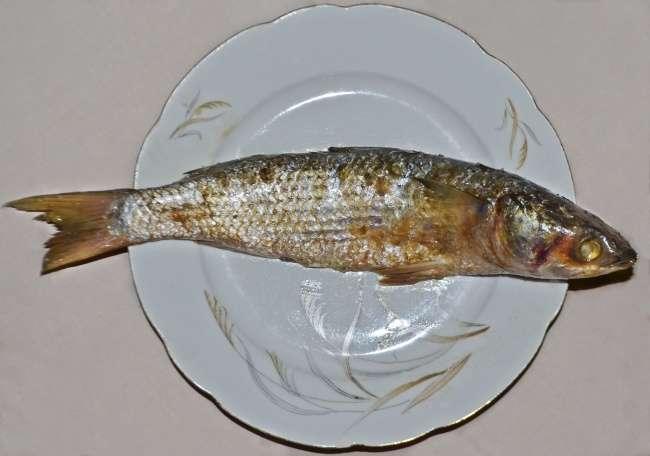 12опасных блюд, которые люди продолжают есть вопреки здравому смыслу