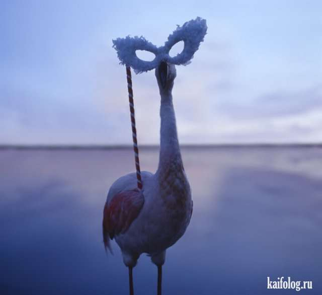 Необычные приколы (55 фото)