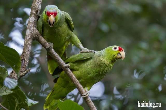 Прикольные животные и птицы (50 фото)