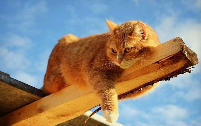 Стратегия кота Василия-1 фото-