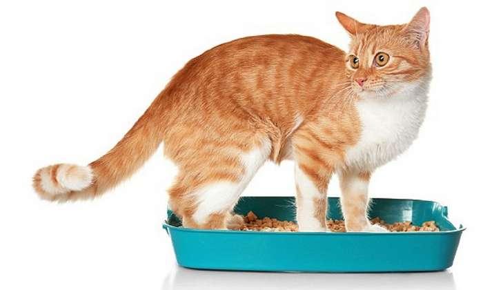 Домашние кошки могут стать причиной смертельных заболеваний-3 фото-