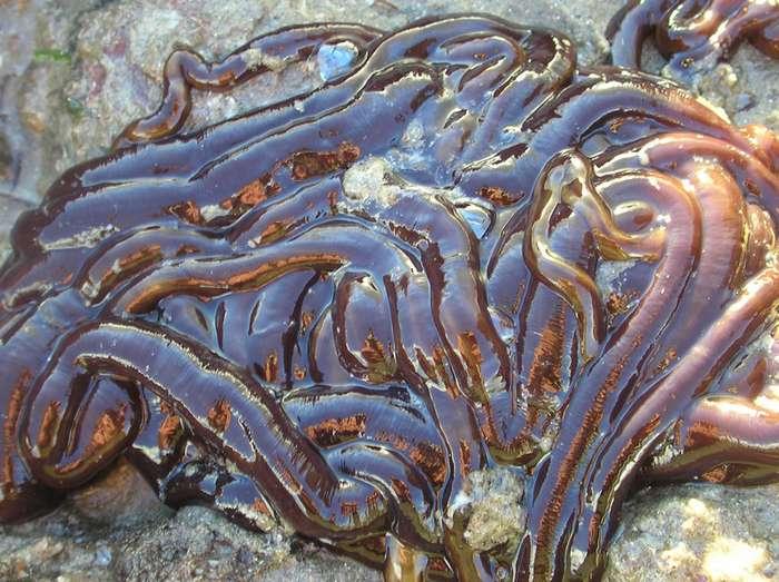 Самый большой червяк в мире-5 фото + 1 видео-