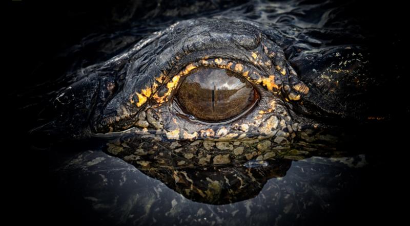 Самые красивые фотографии дикой природы в 2017 году-25 фото-