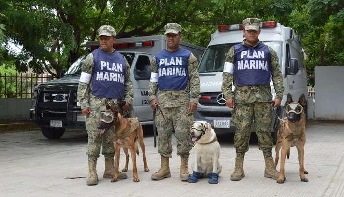 Эта служебная собака из Мексики за короткое начало карьеры спасла уже 52 человека-6 фото-