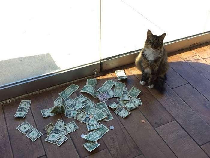 Осторожно! Кот-гопник из Оклахомы заберёт все ваши денежки-6 фото-