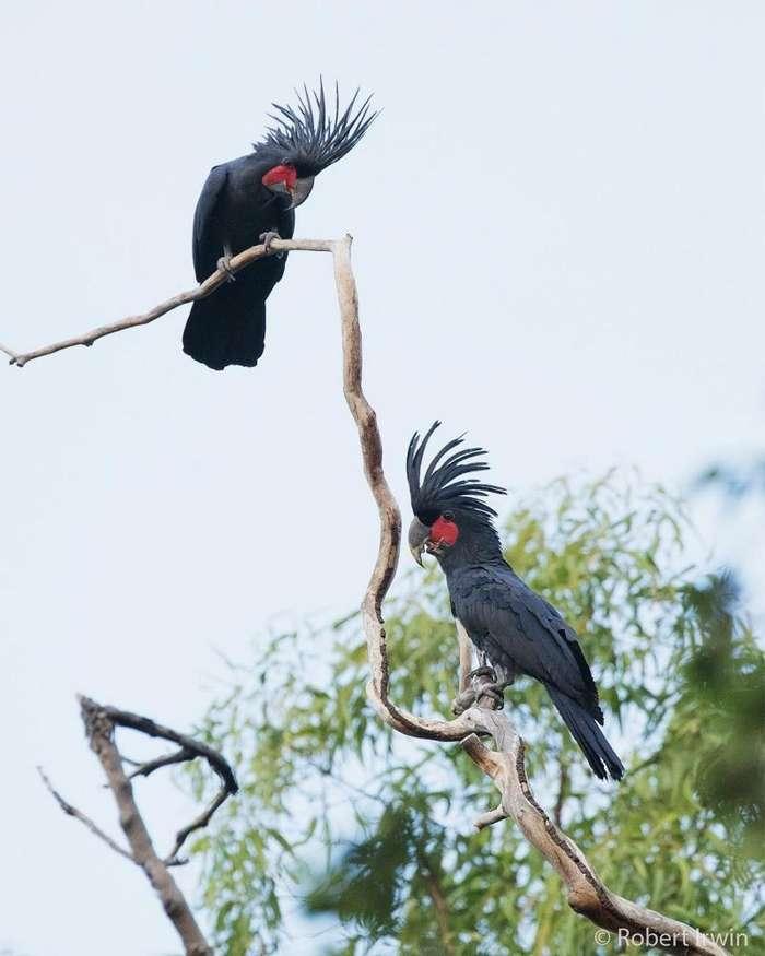 Невероятные фото природы от Роберта Ирвина-30 фото-