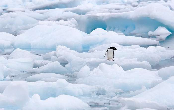 Невероятно очаровательные пингвины от фотографа, влюбленного в Антарктику-18 фото-