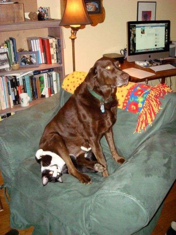 Дружба собак и кошек-13 фото-