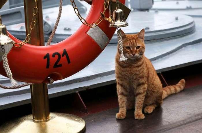 Хвостатые, усатые и пернатые соратники моряков на кораблях-10 фото-