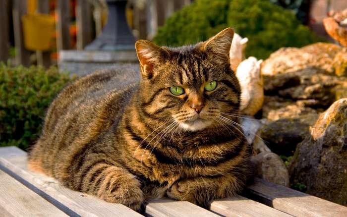 Обязанности кота-6 фото-