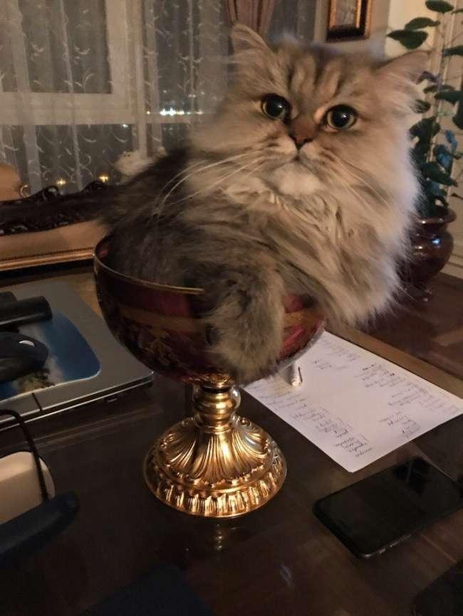 20потрясающих котов, которые сломали систему