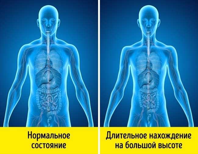 Как реагирует наше тело наперегрев, переохлаждение, голод иеще 5экстремальных ситуаций