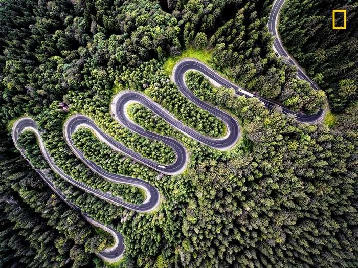 National Geographic представляет лучшие фотографии дикой природы этого года-15 фото-