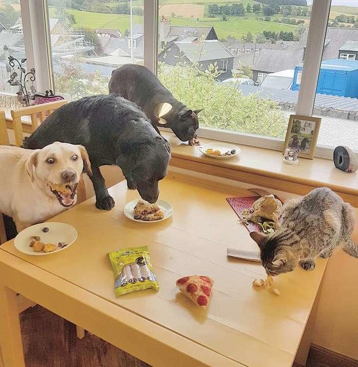 35 избалованных собак, жизни которых позавидуют многие-35 фото-