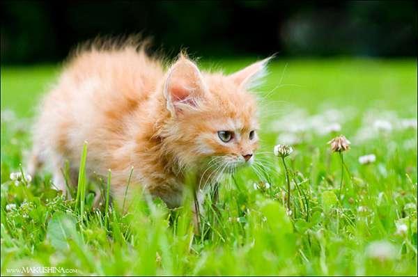 Её преобразила любовь! история спасения котенка в 19 фотографиях-19 фото-