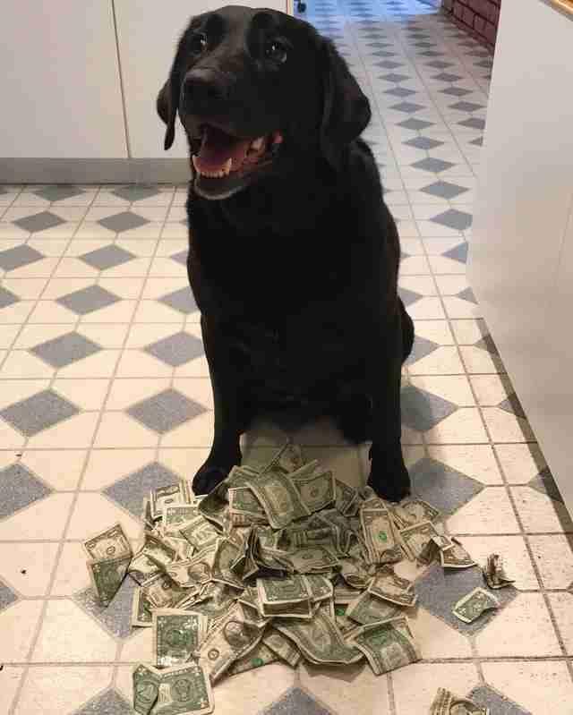 Лучшая из финансистов среди собак-8 фото-
