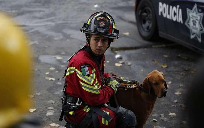Собачья работа: поиск людей под завалами-15 фото-