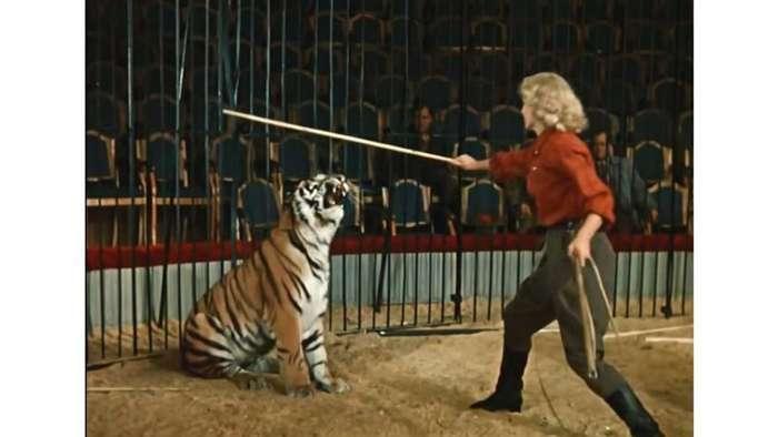 -Ап! И тигры у ног моих сели...-: как полосатых хищников готовили к съемкам в фильме -Укротительница тигров--10 фото-