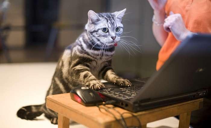 Почувствуй себя хакером: 35 комбинаций клавиш Windows и Mac, которые пригодятся-7 фото-