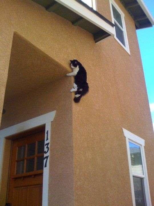 Любопытство до добра не доведет: коты, попавшие в ловушку-12 фото + 1 видео-