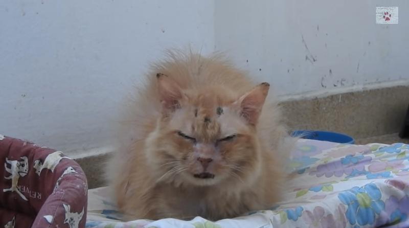 Эта кошка разучилась доверять людям, но оказалось - в мире есть добро-4 фото + 1 видео-