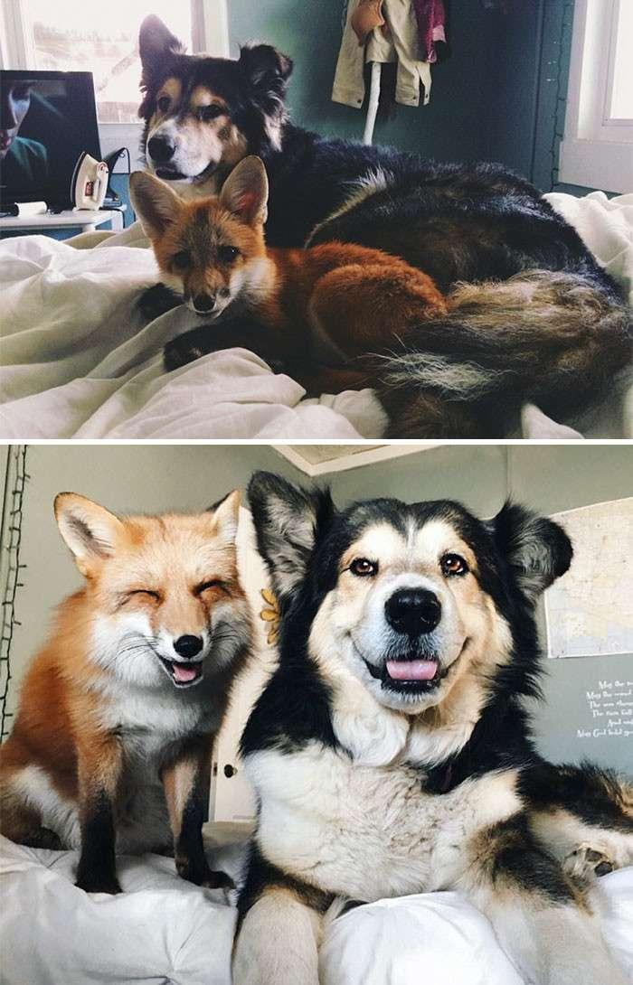 Тогда и сейчас: 14 фотографий друзей-животных, которые выросли вместе-15 фото-