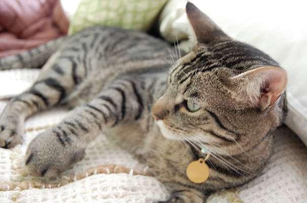Расплата за любопытство: 30 котов, ужаленных пчелами и осами-31 фото-