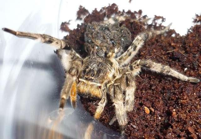 Австралийцам на зависть: 12 ядовитых существ, обитающих в России-13 фото-