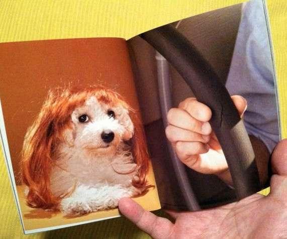 Самые нелепые книги-14 фото-