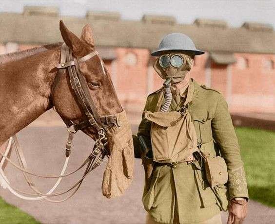 Животные и война - все для победы-21 фото-