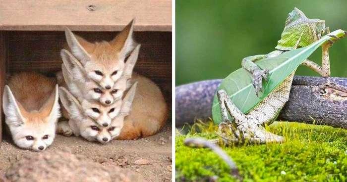 17 фото животных, сделанных в самый нужный момент-18 фото-