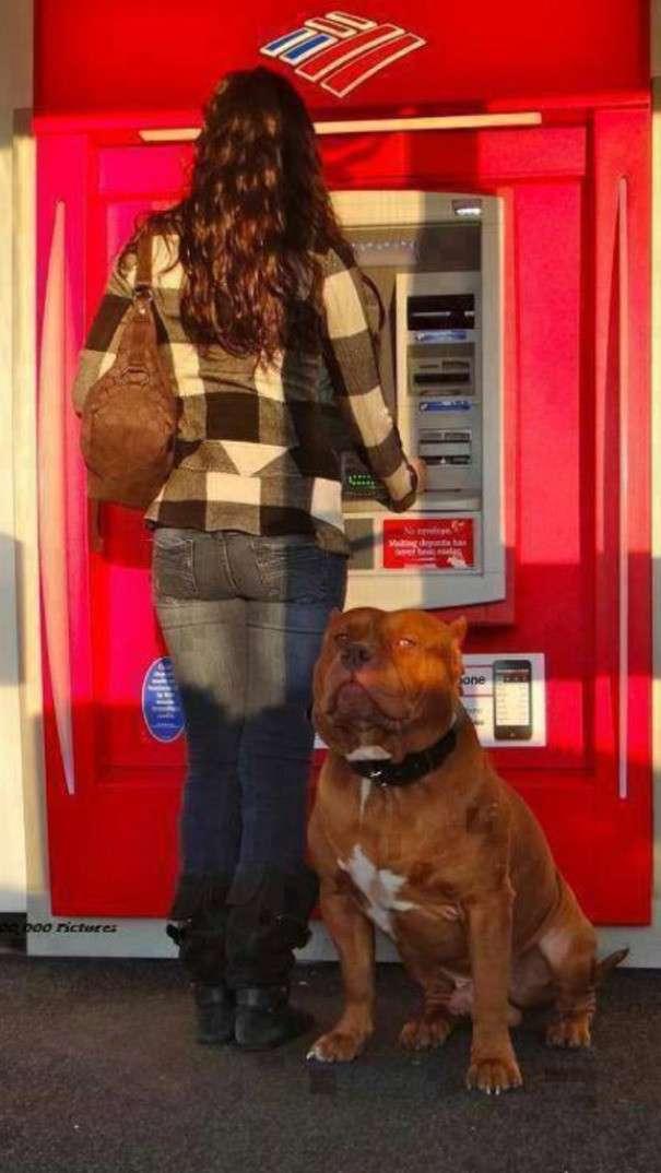 Инструкция по ночному походу в банкомат: смотрите и запоминайте!-14 фото-