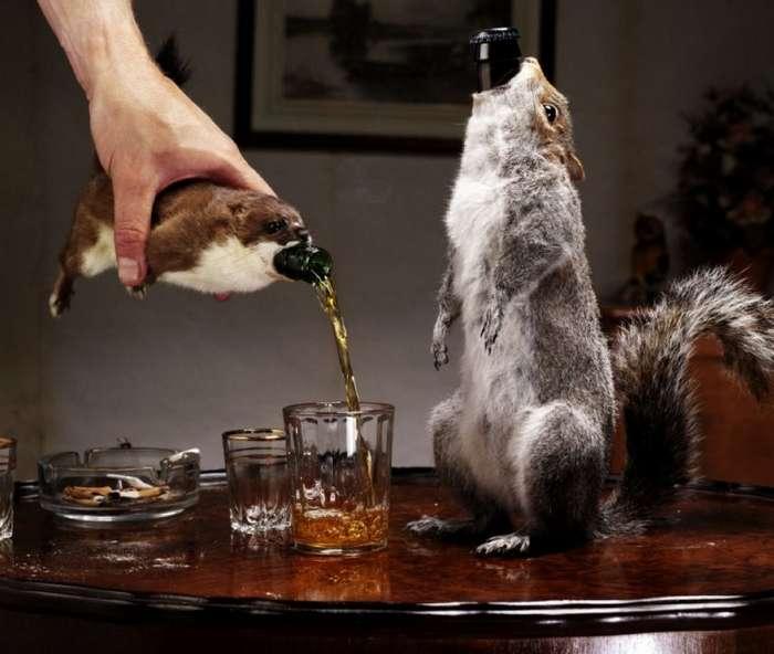 Интересные факты о пиве-12 фото-