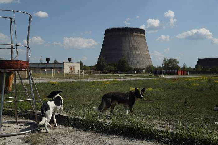 -Собаки Чернобыля-