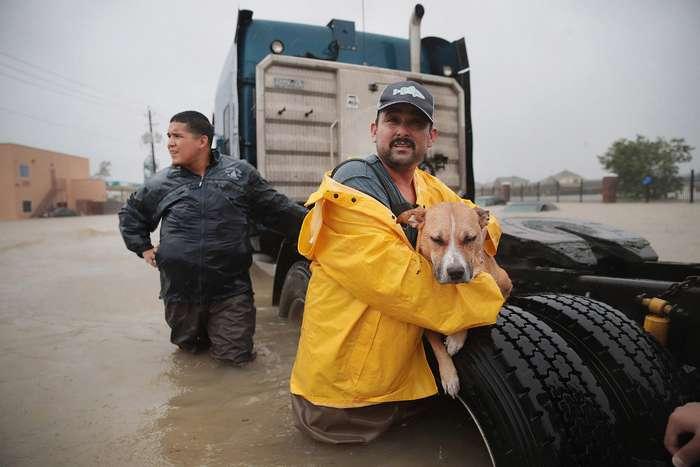 Как в США спасали домашних питомцев от урагана -Харви-