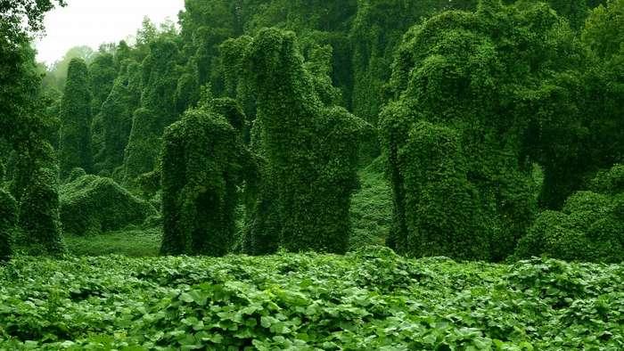 Растения из кошмаров